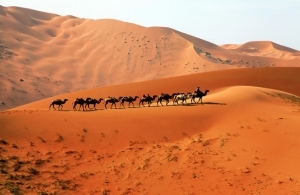 Camel Riding 14 Days